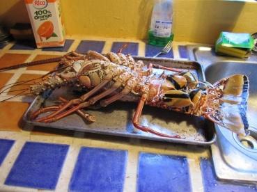 Lobster Casa Dorado